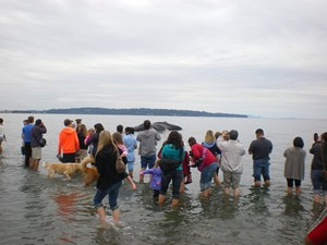 humpback whale beaching